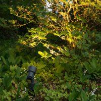 Insekten und Licht
