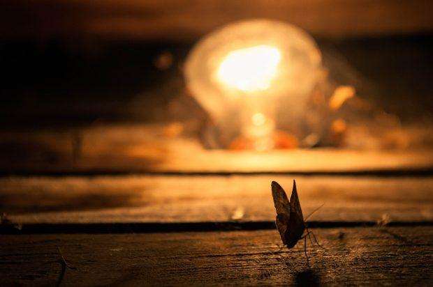 Insekten und Licht Motte