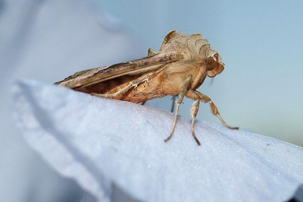 Insekten und Licht Nachtfalter